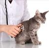 Ветеринарные клиники в Котово